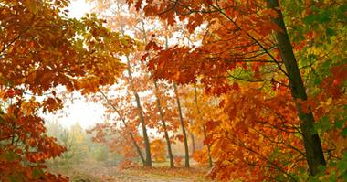 Long range autumn forecast