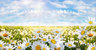 Pollen count forecast